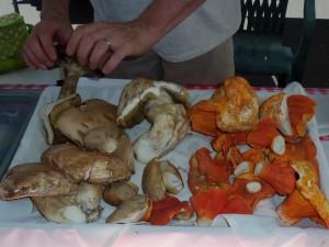 Mushrooms at the Flagstaff Farners Market