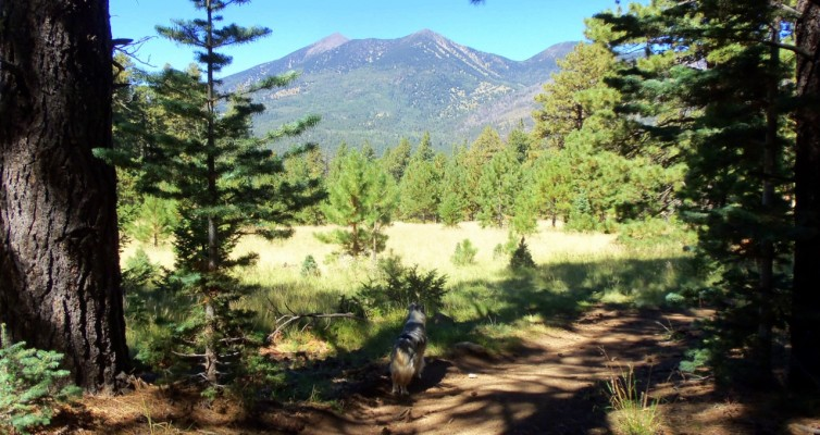 View of the San Francisco Peaks from Sunset Trail