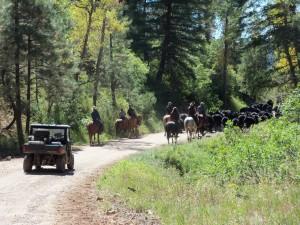 Cattle round-up