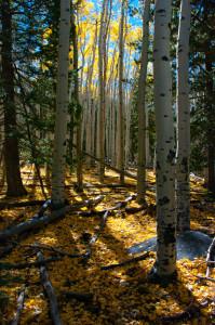 Bear Jaw Trail