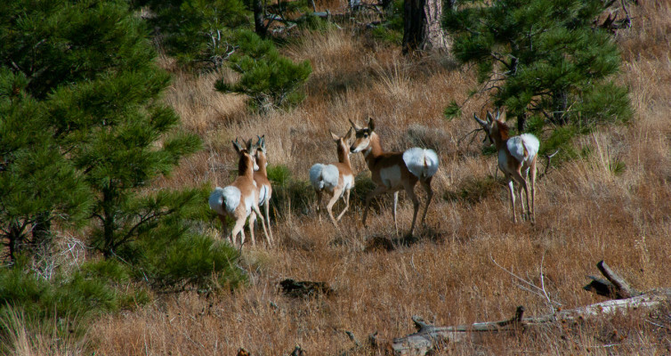 Robinson Crater Hike: Pronghorn Sighting
