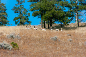 Robinson Crater Hike: Pronghorn