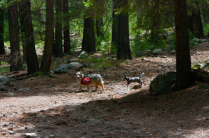 Toby and Dax, Inner Basin Trail
